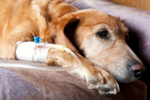 Dog Cancer Survival Guide