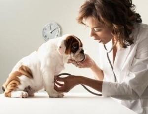 Dog Sickness